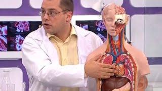 Как устроено сердце. Сердечная аритмия: симптомы, причины и лечение(Сердце — фиброзно-мышечный полый орган, обеспечивающий посредством повторных ритмичных сокращений ток..., 2015-07-22T20:46:44.000Z)