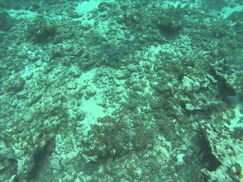 Grand Cayman School of Fish
