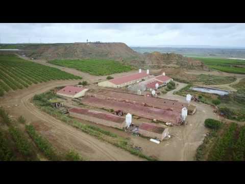 El impacto ambiental de la industria porcina
