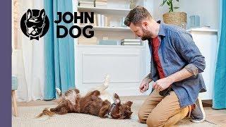 """Sztuczka """"turlanie"""" – TRENING – John Dog"""