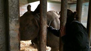 Carnet rose au Cerza : naissance d'un bébé rhinoceros