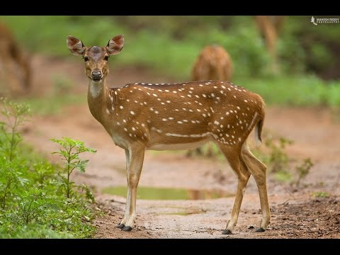 best wildlife | sathyamangalam  reserve forest|