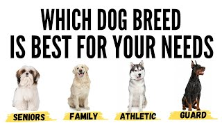 How to Choose the Perfect Dog Breed - Choose the Best Dog Breed for you
