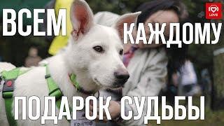 """Love Radio и выставка """"Всем по собаке!"""""""