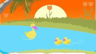 Bài hát tiếng Anh trẻ em: 5 little ducks