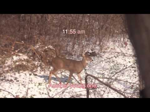 The December Rut:  A day on a small property observing buck behavior