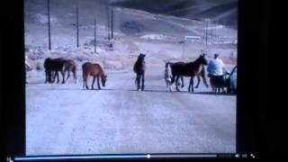 Video Kid Kicked by Wild Herd Horses While Parents Decide What Color of Helmet to Buy - Stupid Men download MP3, 3GP, MP4, WEBM, AVI, FLV November 2018