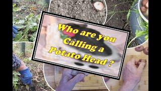 Who You Calling a Potato Head ?