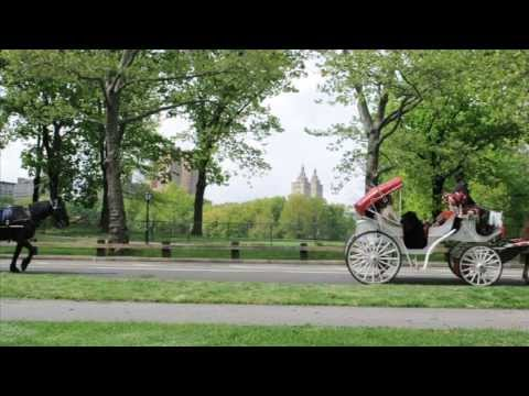 Horse and Carriage Tours Central Park NYC