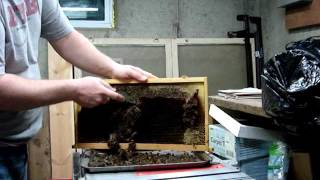 Scraping and Reusing Plasticell Frames for Beekeeping