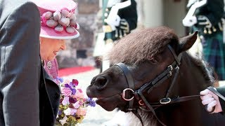 Pony tries to eat the Queen's flowers at Stirling Castle