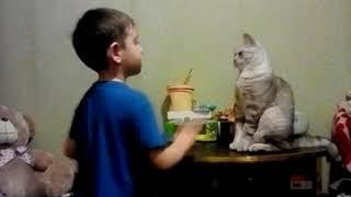 Коту плохо кот каратист
