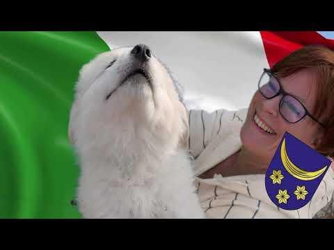 Video Di Grande Torrente Maremmánsko Abruzský pastevecký pes