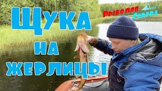 ЩУКА НА ЖЕРЛИЦЫ В АРХАНГЕЛЬСКОЙ ОБЛАСТИ КАК ПРАВИЛЬНО УСТАНАВЛИВАТЬ ЖЕРЛИЦЫ Летняя рыбалка 2021
