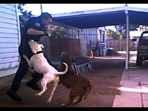 Police officer saves a dog from pitbull!!!