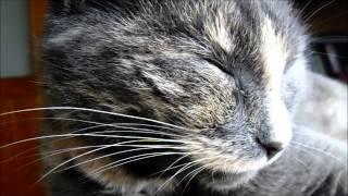 Кадр из жизни. Кошки, которые любят спать.