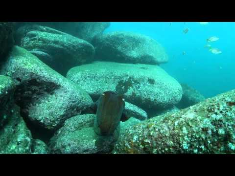 Dry Dive 2 - Quarantine Bay, Sydney Harbour - seagrass beds, fish nursery