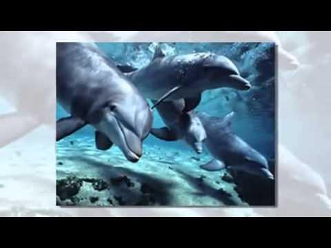 Слайд шоу из фото - Киты и дельфины