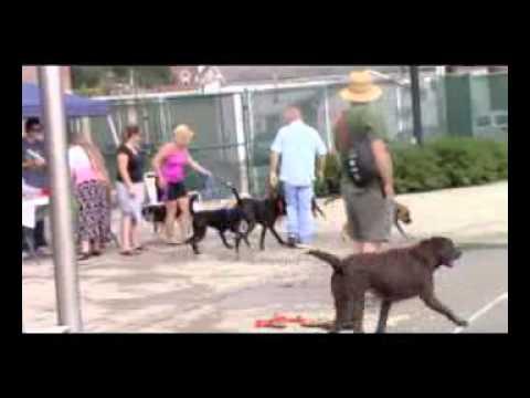 Athens Showcase: Nelsonville Dog Swim 2015