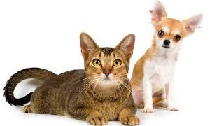 Для чего нужны домашние животные человеку плюсы и минусы!