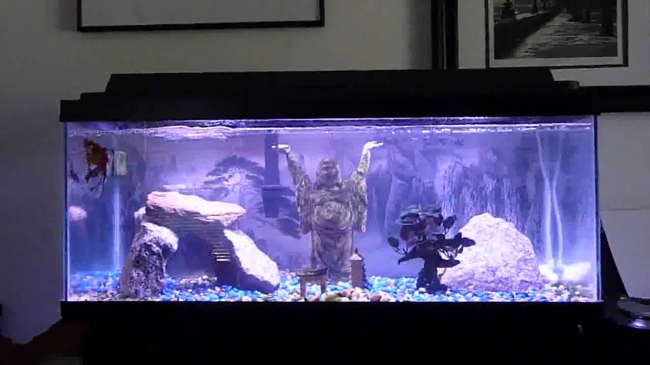 Zen aquarium youtube for Decoration zen aquarium