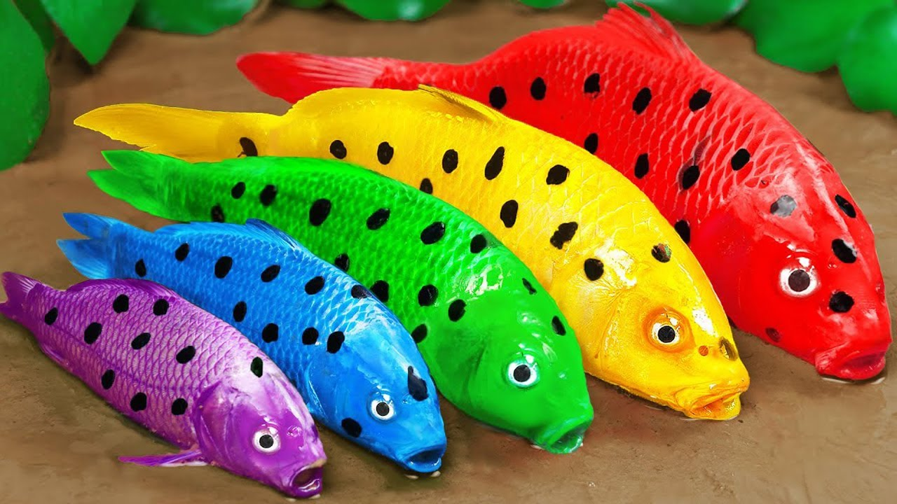 Download Stop Motion ASMR   Rescue the Family of Colorful Muddy Spotted Fishes  Experiments Funny videos