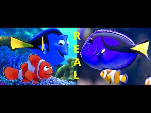 Os Personagens do Filme ''Procurando Nemo'' em Aquários