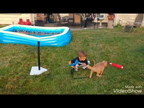 Obedience training & dog show announcement