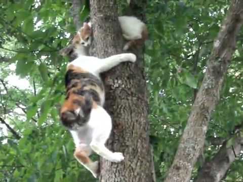 Thumbnail for Cat Video Mama Cat Instructs Kitten on Tree Climbing