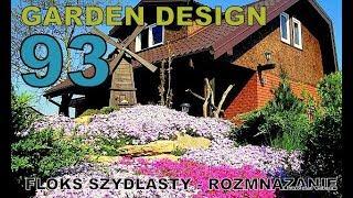 Garden (93) - Floks szydlasty, rozmnażanie - Phloxes, reproduction.
