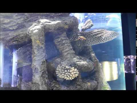 A trip to sharjah Aquarium - FS1/F2