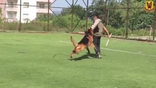 Zeus von Petworld Bodyguard ve Alan Koruma Eğitimi