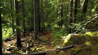 GLIDE THROUGH THE FOREST | Full Sfera 3D