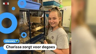In Nederlandse opvangcentra zitten te veel exotische dieren