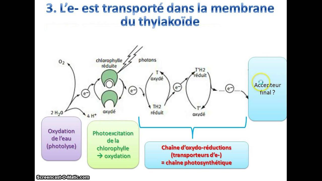Photosythese