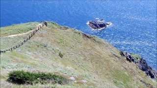 岬に向かう途中タヌキとイノシシを見た。
