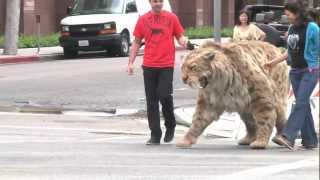 On Sept. 5 2012, our Saber-toothed cat took a stroll down to Wilshi...
