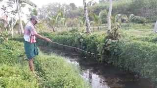 Fishing in kerala style .... : )  Giant snake head fishing (varal)   Flipkart/Amazon/Bitcoin