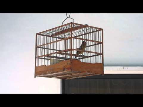brown bird wcd
