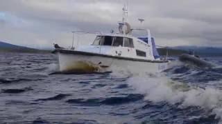 Адмиралец / Загородный клуб водномоторников Ристикент / The Ristikent boat Club