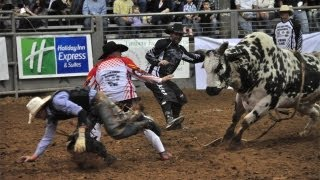 Rodeo Bulls Kick Higher and Buck Harder