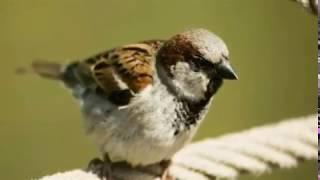 अगर घर में आ जाए यह पक्षी तो मालामाल हो जाएंगे आप, हालात हैं ऐसे कि ढूंढे से भी नहीं मिलती