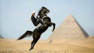 Egypt Horse Show