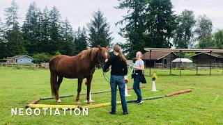 Equine Facilitated Youth Session