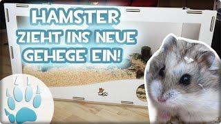 Hamster zieht in neues Gehege ein | Rodipet Nagarium unboxing & einrichten | Sazus Fellnasen