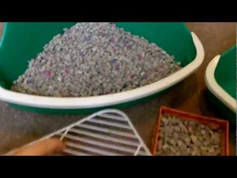 Litter Training For Rats