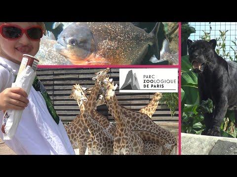 VLOG • Un Animal, Une Blague au Zoo de Vincennes (partie 2) - Studio Bubble Tea vlogging Paris Zoo