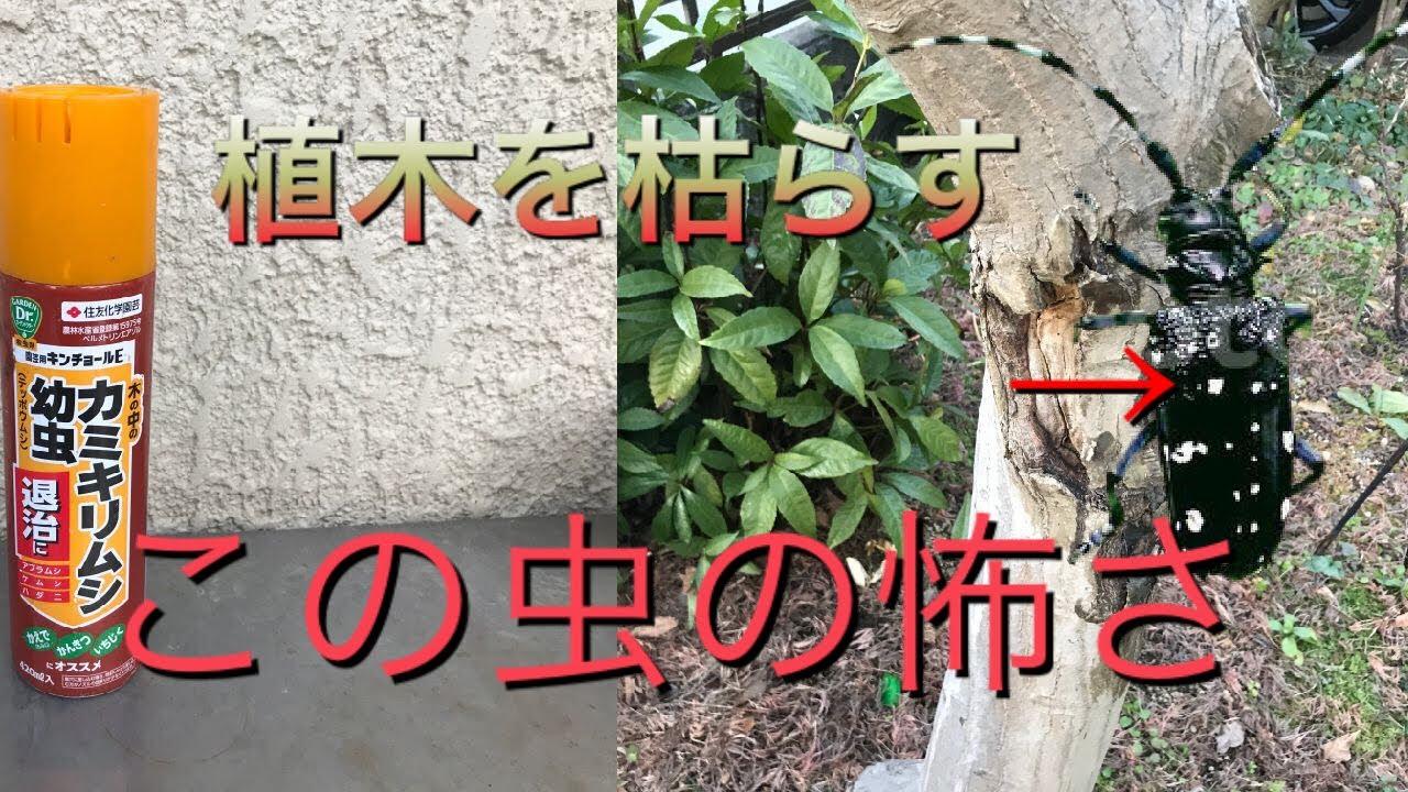 植木を枯らしてしまうカミキリムシの対処法について