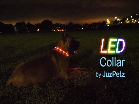 LED Dog Collar by JuzPetz - Walk Your Dog Safely at Night