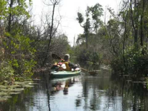 Okefenokee Swamp Trip 2008
